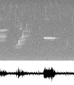 birdsong_spectrogram